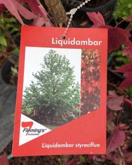 Liquidamber