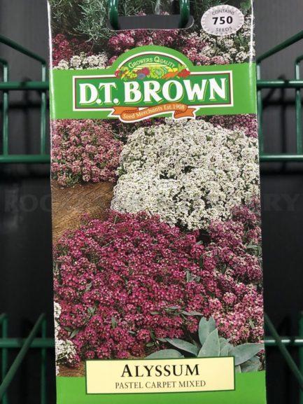 Seeds - alyssum pastel carpet mixed