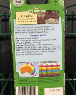 Alyssum – Pastel Carpet Mixed