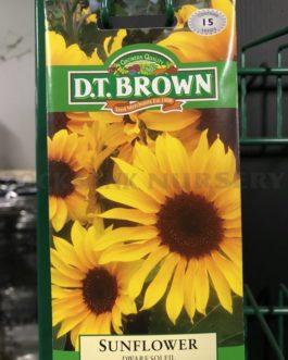 Sunflower – Dwarf Soleil