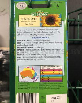 Sunflower – Sun King