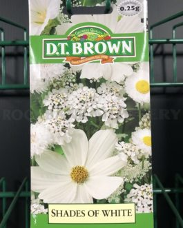 Shades of White Annuals