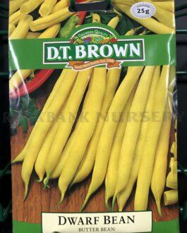 Dwarf Bean – Butter Bean