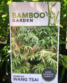 Bamboo Wang Tsai