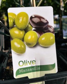 Olive 'Manzanillo'