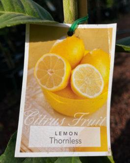Lemon 'Thornless'