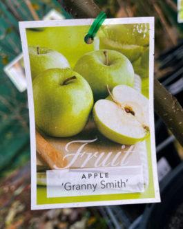 Apple 'Granny Smith'