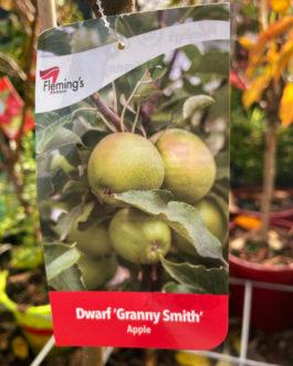 Dwarf Apple Granny Smith