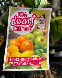 Dwarf Fruit & Citrus