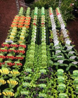 Vegetable & Herbs